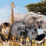 which zoologist are you? zoology quiz